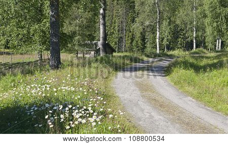 Gravel, dirt road runs through meadows and forest.