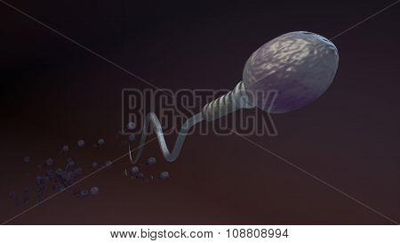 Human sperm cell spermatozoa