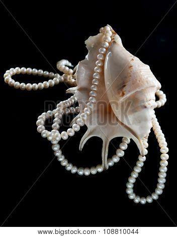 Pearl Ornament On A Sea Shell