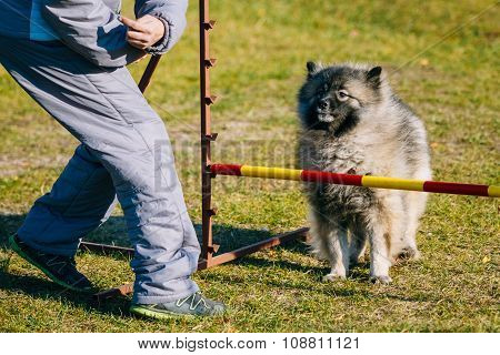 Keeshound, Keeshond, Keeshonden Dog German Spitz Wolfspitz