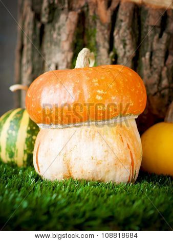 Small Decorative  Pumpkin On Green Grass