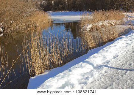 Winter Landscape Schlierach River With Dry Reed And Snow Cover