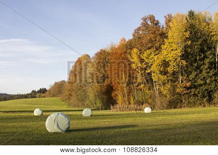 Meadow With Hay Bales, Colorful Edge Of The Wood