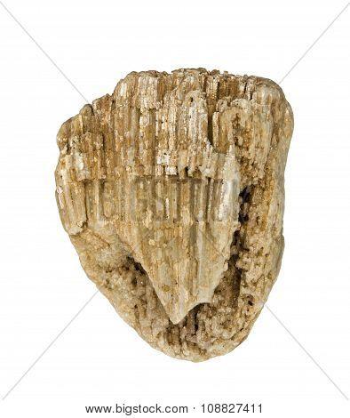 Fossils of sea sponge with quartz crystals