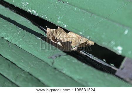 Lone Dry Maple Leaf