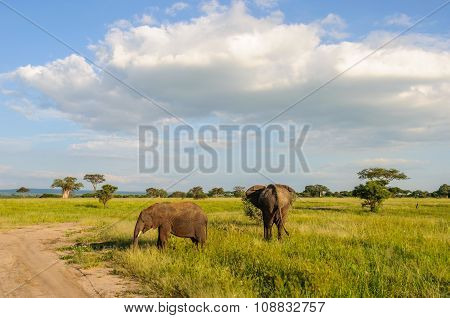 Elephants In The Tarangire Park, Tanzania