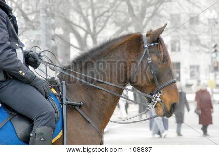 Cop On Horseback