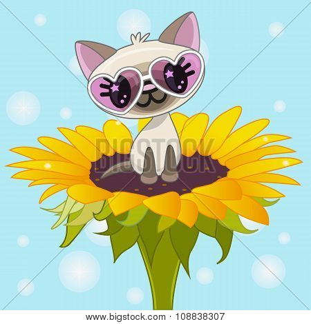 ?artoon Cat