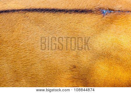 Hair Of A Mammal