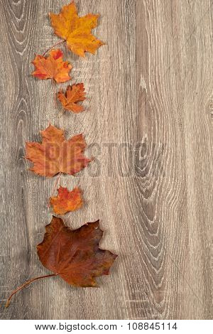 colorful autumn leaves frame on wooden background