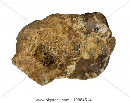 A single fossilized sea sponge in silicon