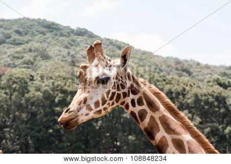 Giraffe Profile Tasting
