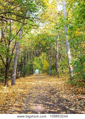 Park Way Lined By Trees