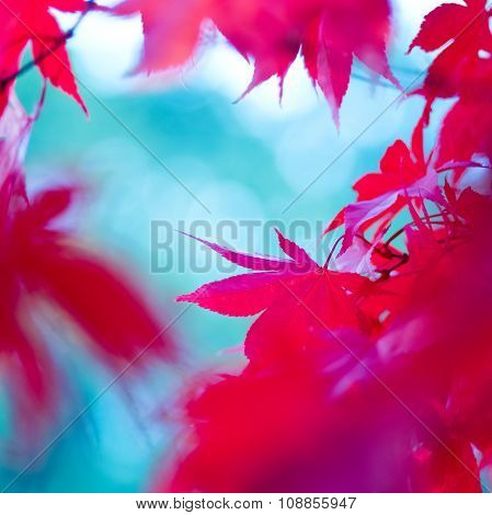 Red Autumn Leaves Abstract Background