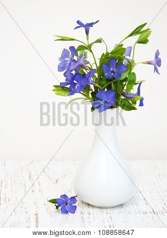 Blue Perwinkle Flowers