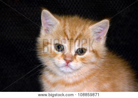 Portrait of a kitten.
