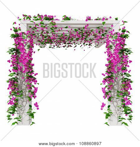 Flowers bougainvillea, front view