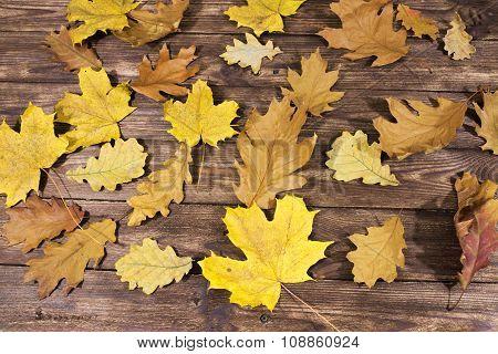 Autumn installation.