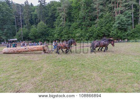 Horse-drawn Vehicles