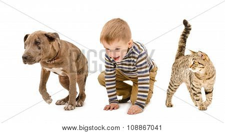 Child, puppy pitbull and cat playing together