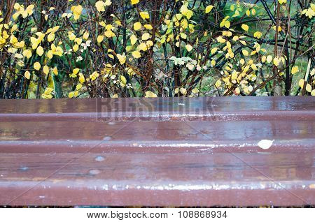 Wooden Bench After A Rain