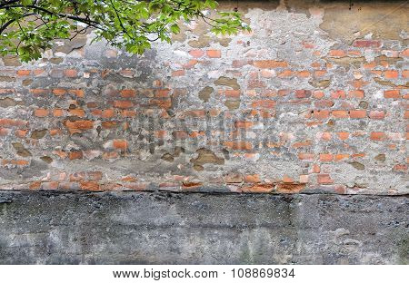 Warn Brick Wall And Leafes