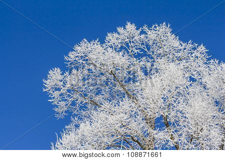 White Winter Wonderland With Blue Sky And Tree From Right