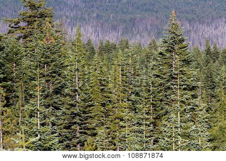 Natural Forest