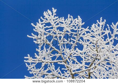 White Winter Wonderland With Blue Sky And Very Detailed Branches