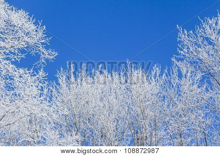 White Winter Wonderland With Blue Sky And Frame Of Trees