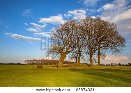 Large Trees On A Tumulus Grave Mound