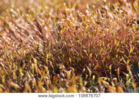 Moss in backlight