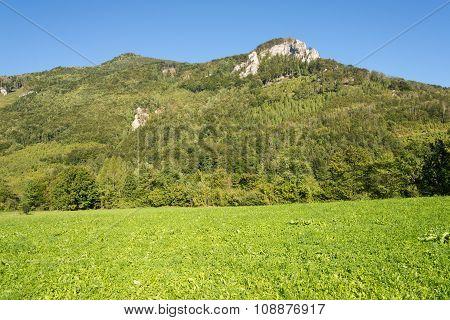 Alpin pasture in Upper Austria