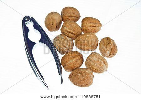 many of walnuts