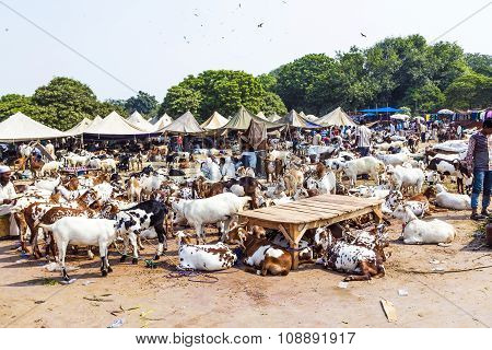 NEW DELHI, INDIA - MAY 7, 2013: goats for selling at the bazaar in New Delhi at the market