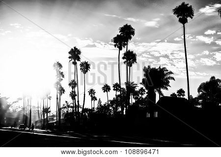 beach sunset in black and white