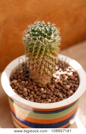 Close Up Small Cactus In A Flowerpot For Decorate