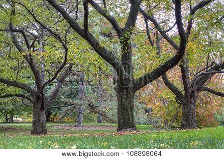 Three trees in fall