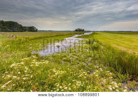 Canal With Water Soldier Vegetation