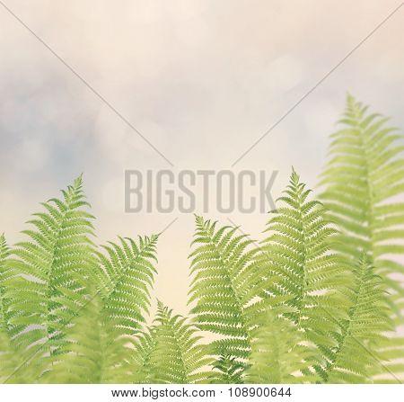 Green Fern Leaves for Background