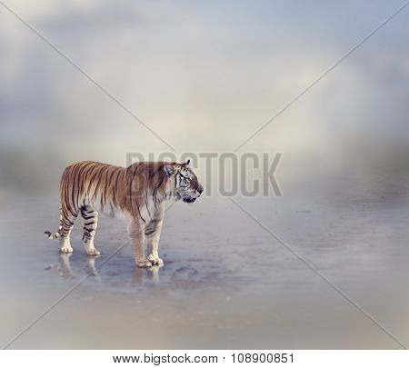 Tiger Near Water with Reflection