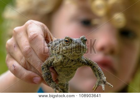 Child Showing A Common Toad