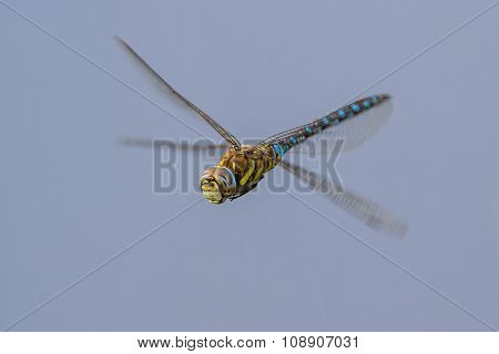 Migrant Hawker On Blue