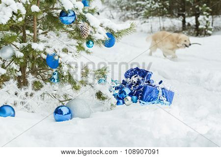 Live snowy pine tree decorated with Christmas ornaments and golden retriever dog carrying wooden sti