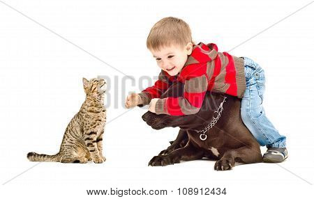 Child, dog and cat cheerfully playing together