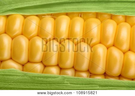 Fresh Corn Maize Closeup