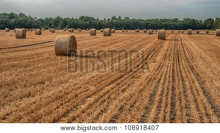 Hay bale in the field