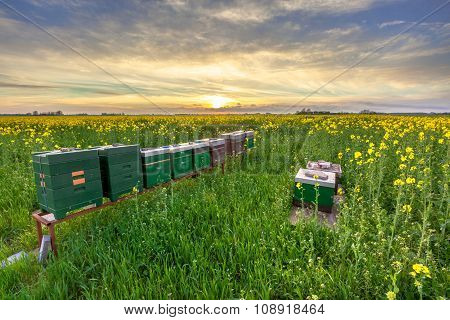 Row Of Beehives In A Field