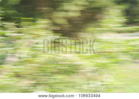 Abstract Movement In The Forest