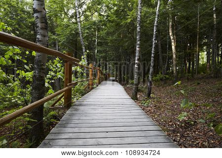 Canada path into the wood